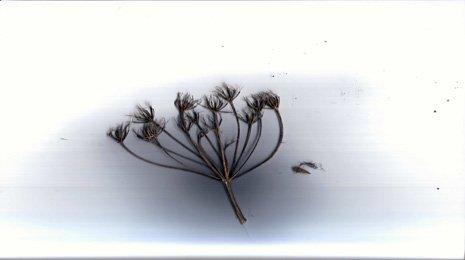 offload-plants-2.jpg